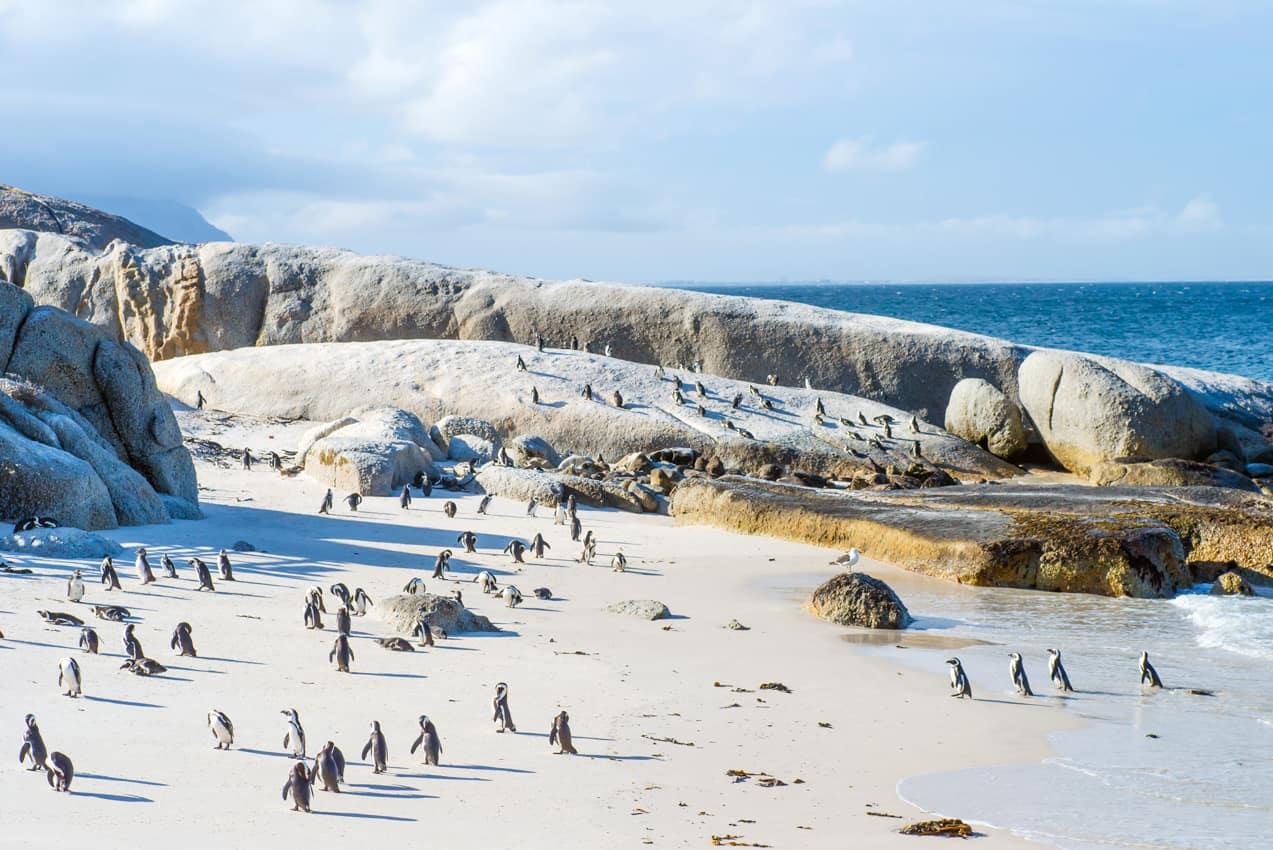 Atrativo turistico África do Sul pinguins Boulder Beach