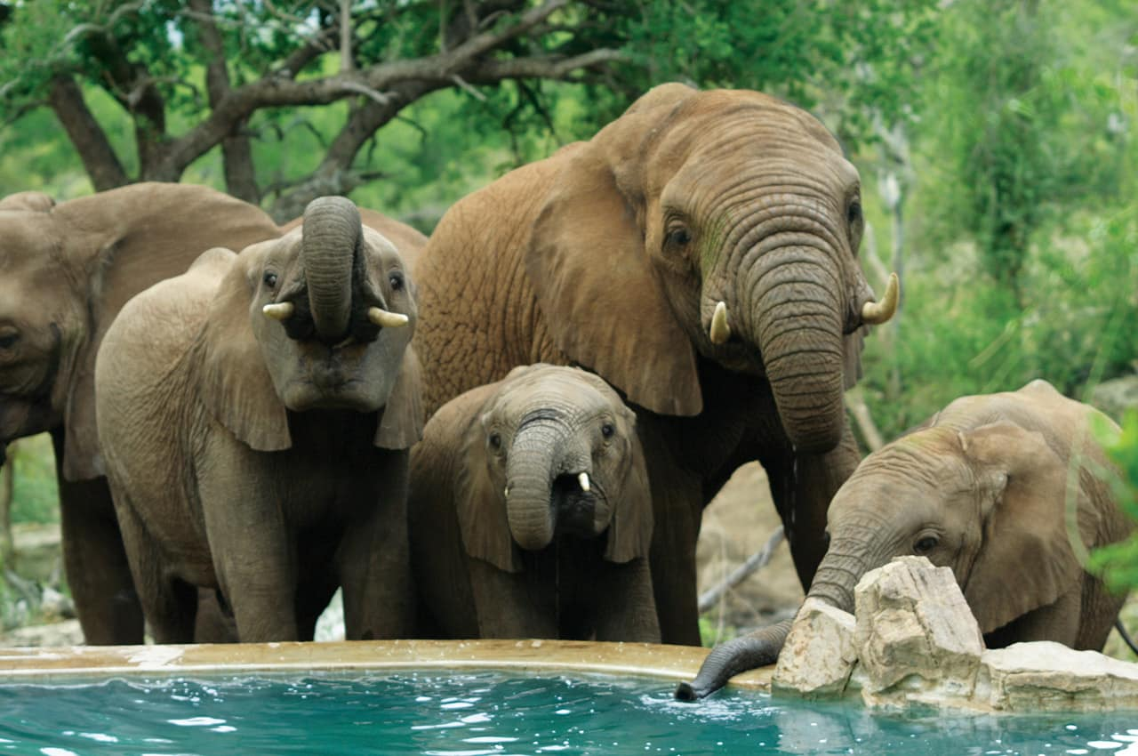 Elefantes no Impodimo Game Lodge