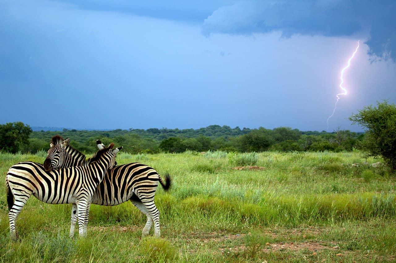 Kapama, África do Sul