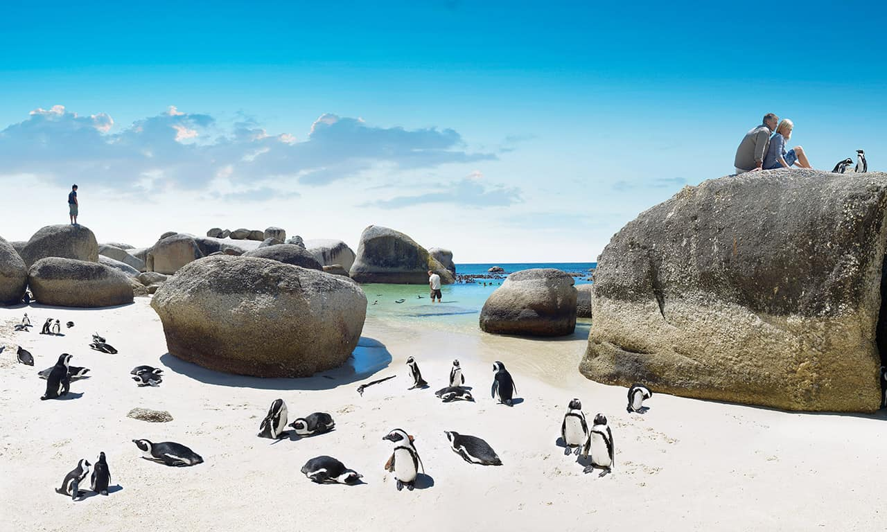 Pinguins na Boulders Beach