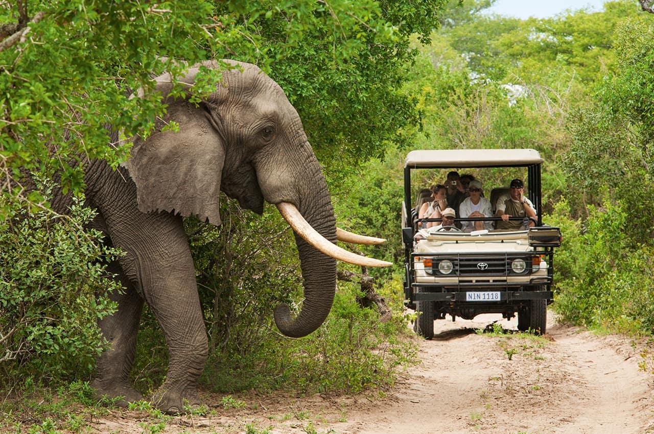 Safári na África do Sul