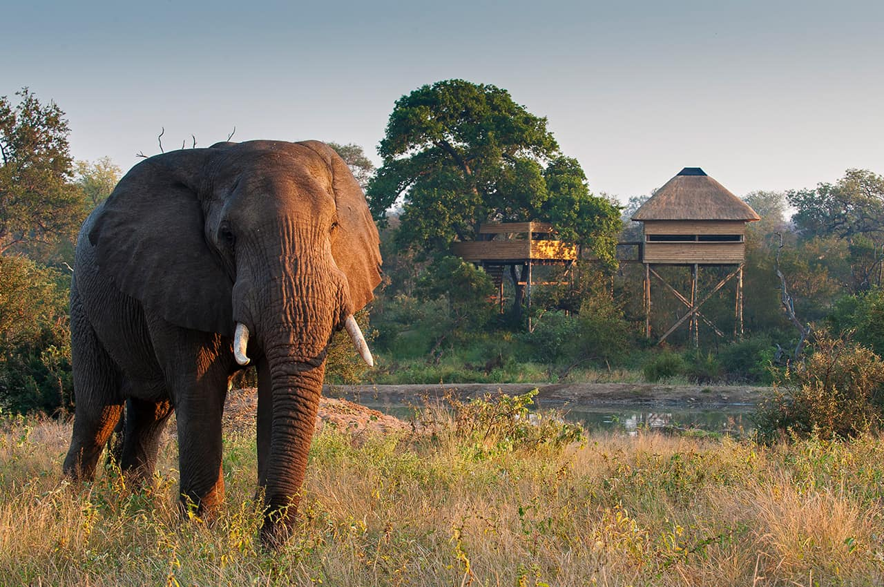 Treehouse Hide, Pondoro Game Lodge