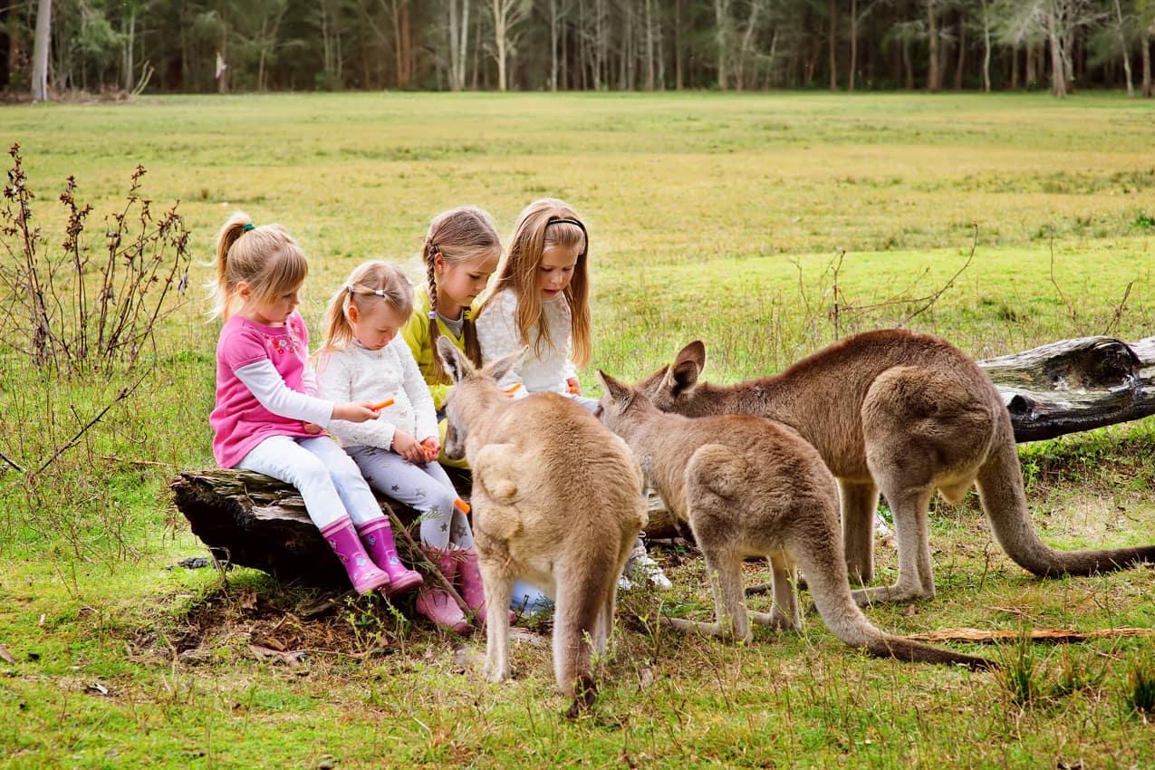 Criancas cangurus Austrália