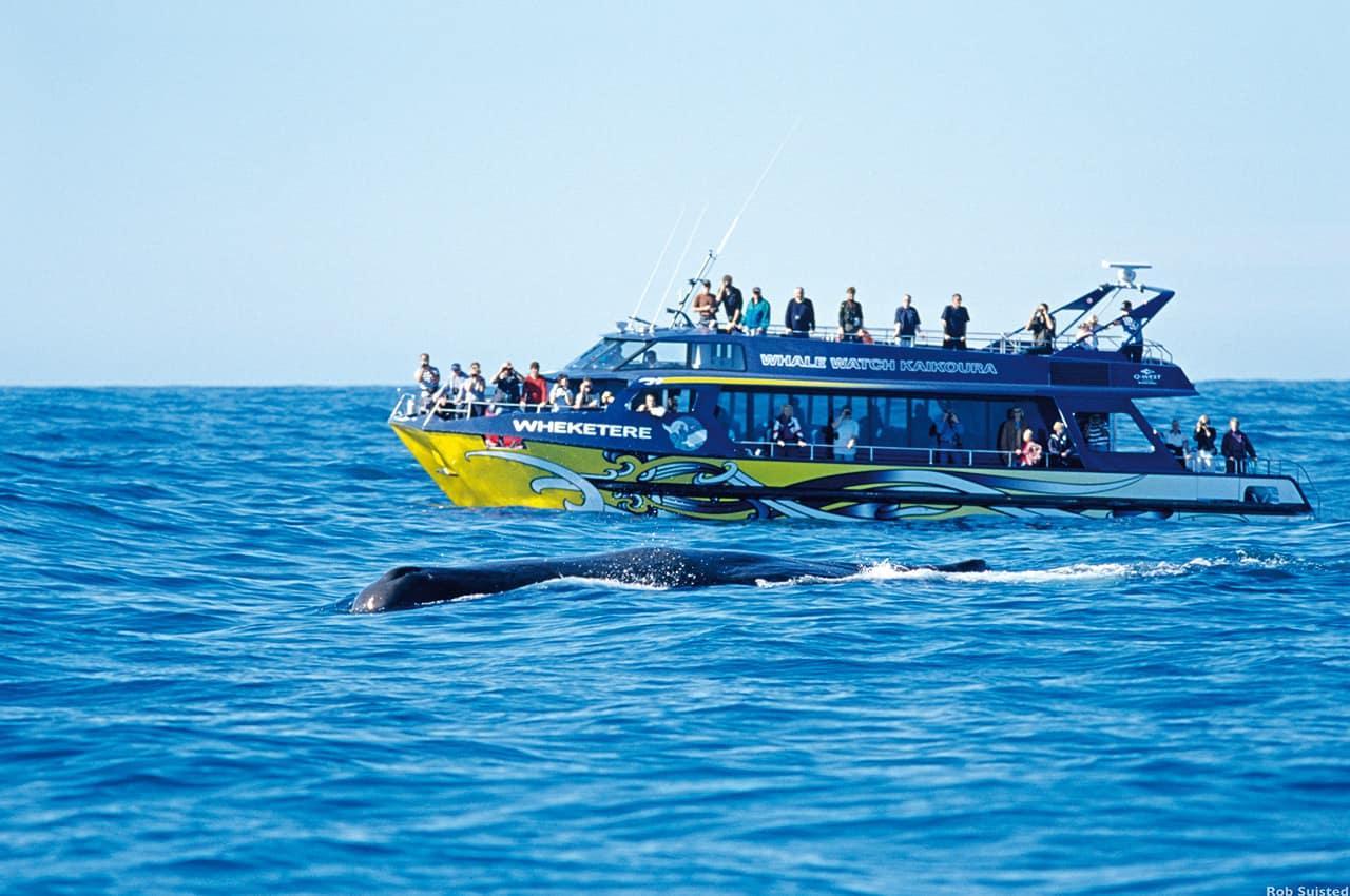 Baleia em Kaikoura