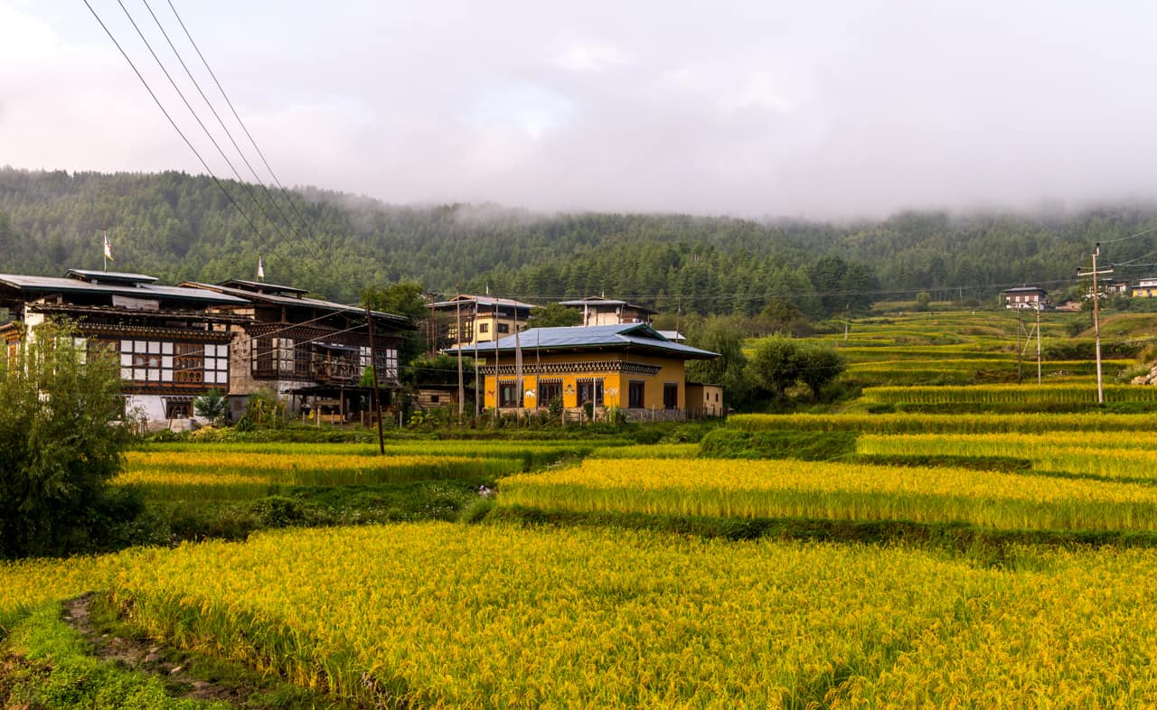 Terraço arroz Paro Butão