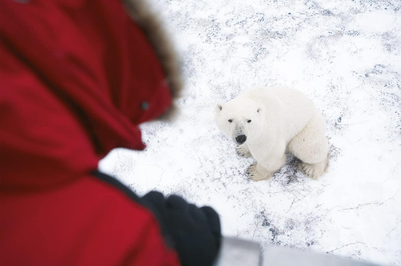 Churchill encontro urso polar