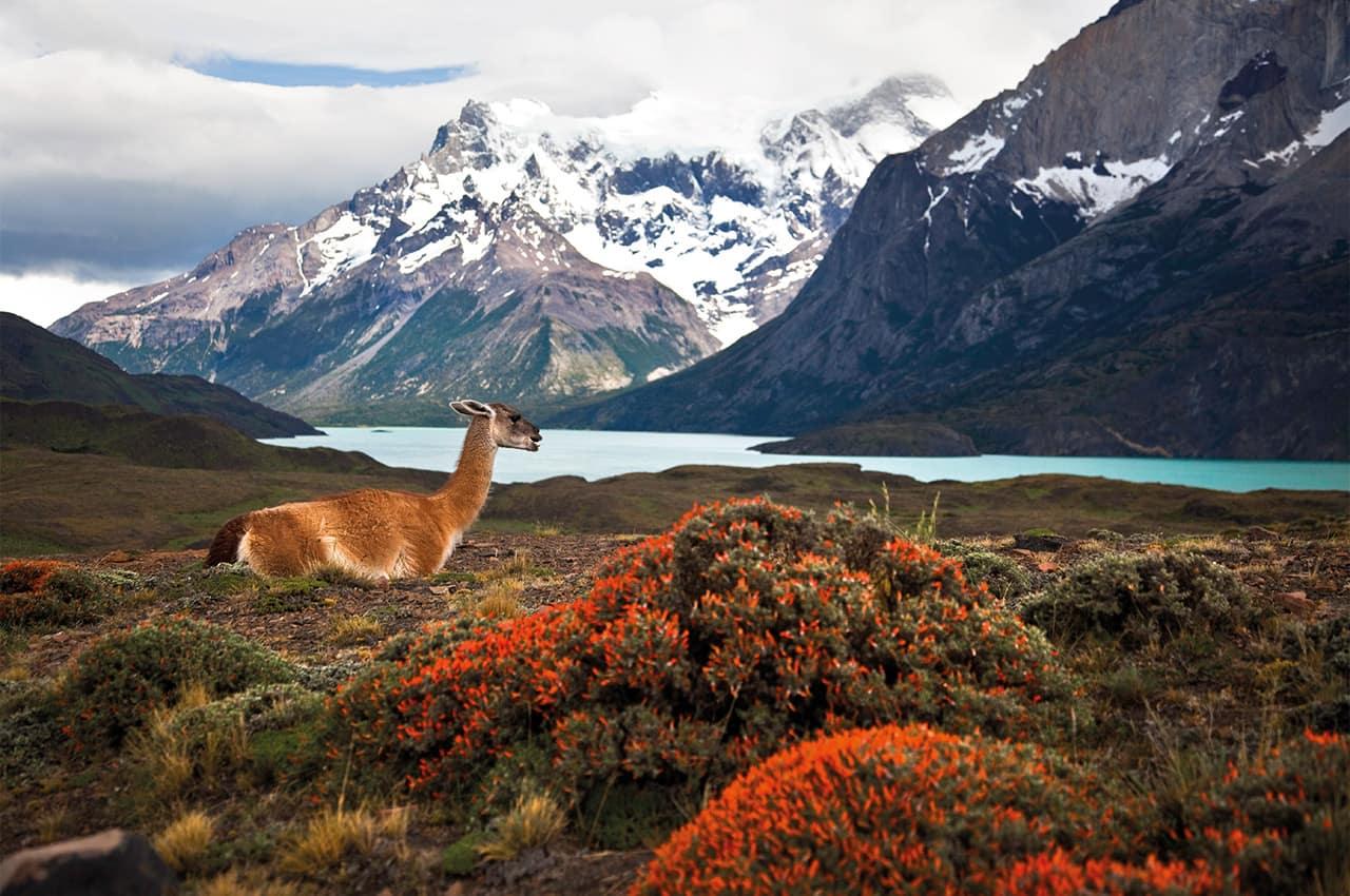 Chile_Parque puerto natales