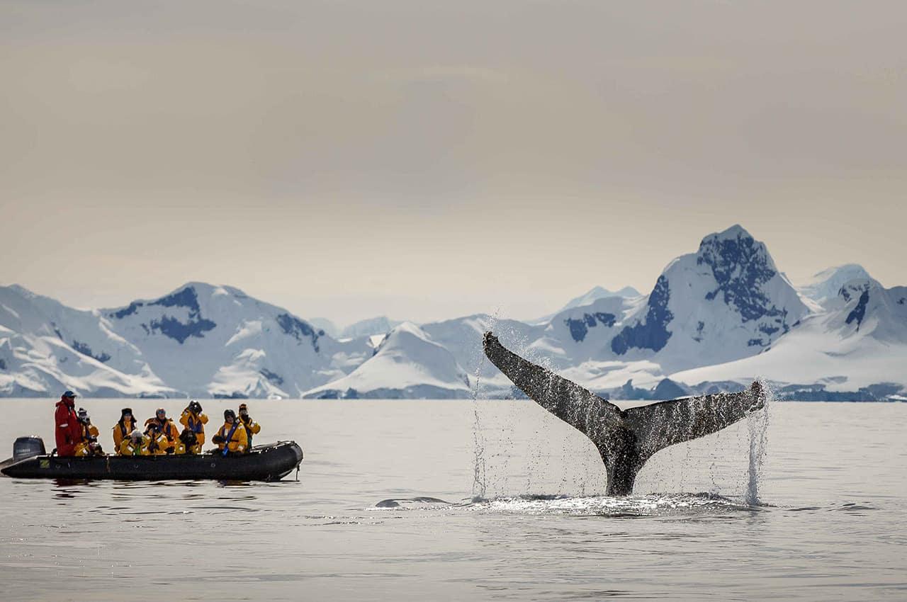 Quark expedition baleia