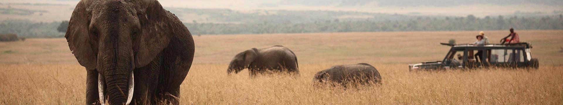 África | Pacotes Kangaroo Tours