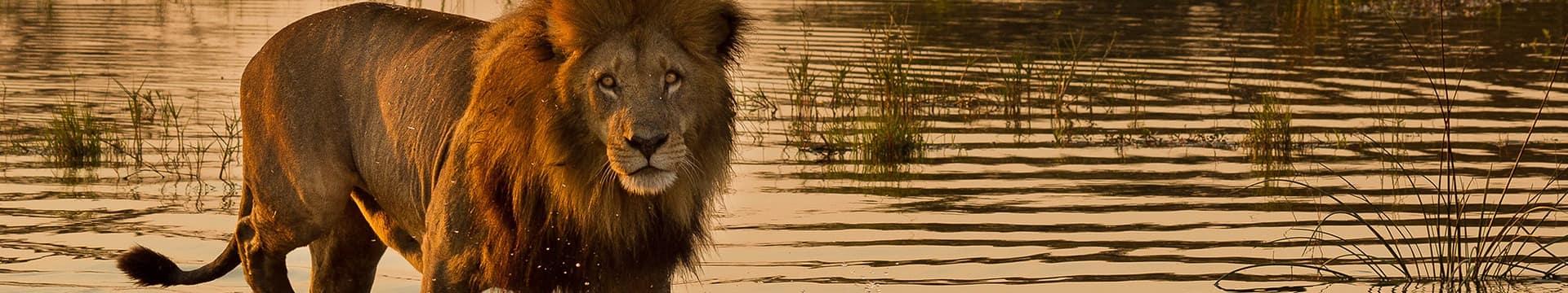 Botswana | Pacotes Kangaroo Tours