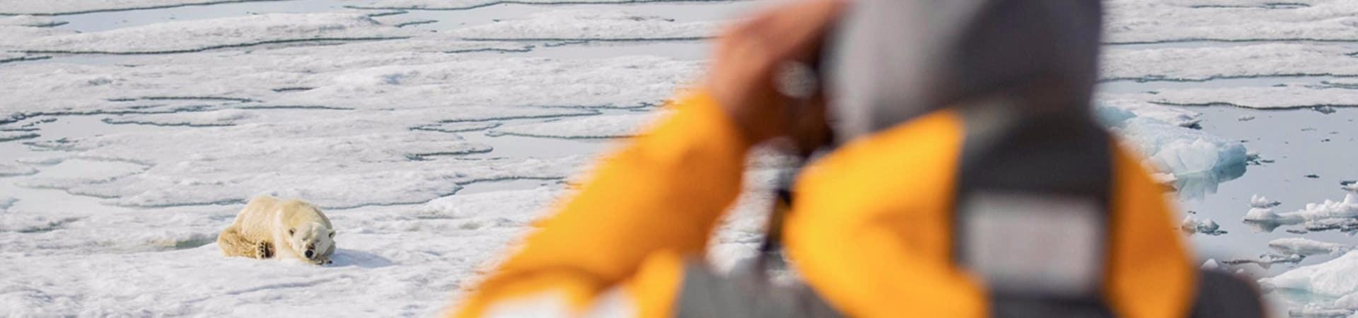 Quarkexpeditions spitsbergen urso polar
