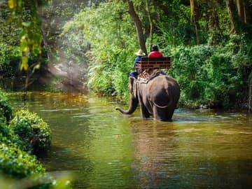 Atividades Tailândia passeio elefante