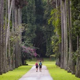 Atração turística Jardim Botânico Peradeniya, Kandy, Sri Lanka