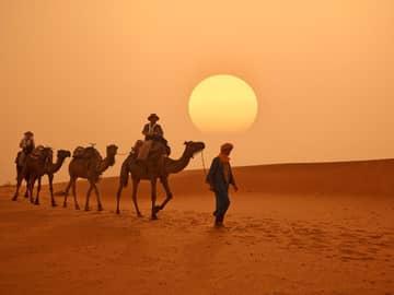 Beduíno e camelos
