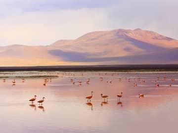 Chile laguna colorada deserto de atacama