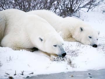 Aventura no Ártico com Tundra Buggy Lodge