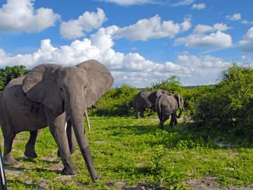 Elefantes safári Parque Nacional Chobe Botswana