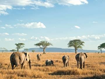 O Melhor do Quênia e Tanzânia