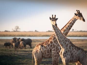 África do Sul, Zâmbia e Botswana