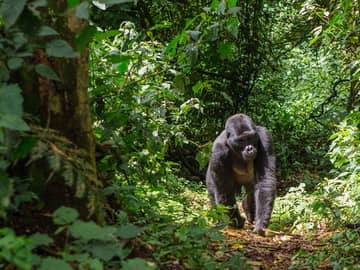 Explorando Uganda