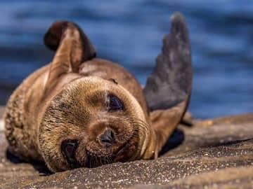 Navegando pelas Ilhas Galápagos