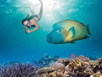 Mergulho na Grande Barreira de Corais, Austrália