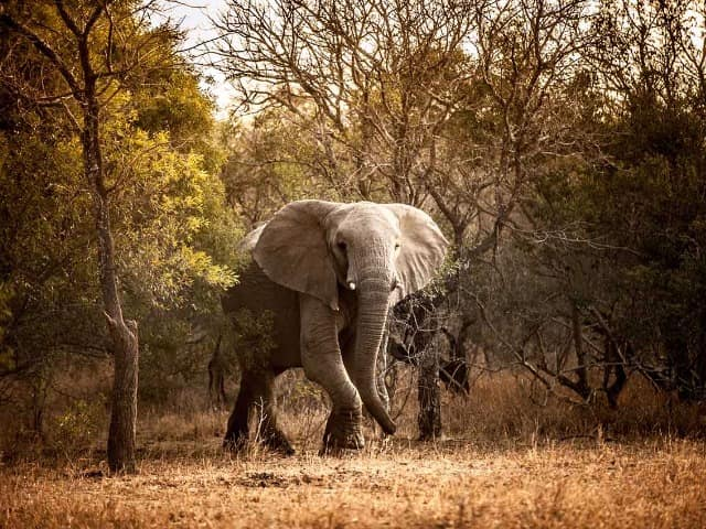 Moditlo river lodge elefante