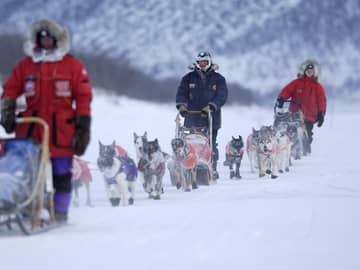 Noruega alta dogsledge