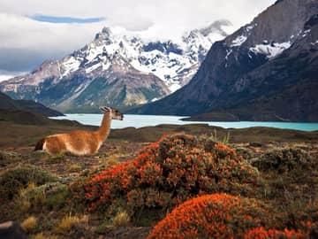 Atacama & Patagônia