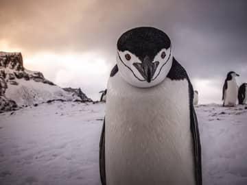 Expedição para a Antártida