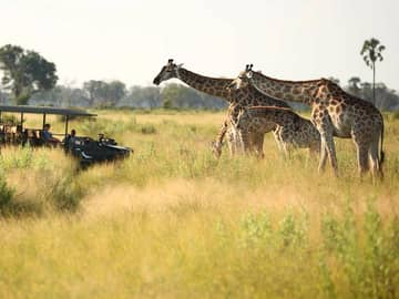 Safari andBeyond Nxabega Okavango
