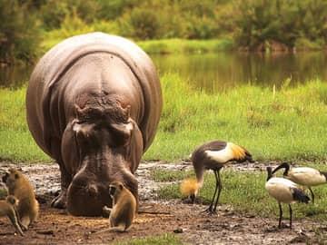Vida selvagem viagem Quênia
