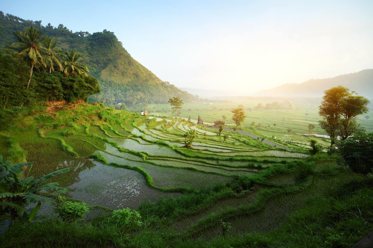 Terraço arroz, Bali, Indonésia