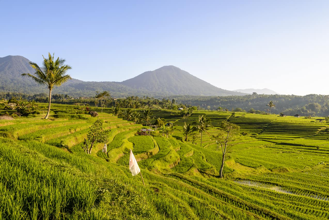 Terraço arroz, Jatiluwih, Bali, Indonésia