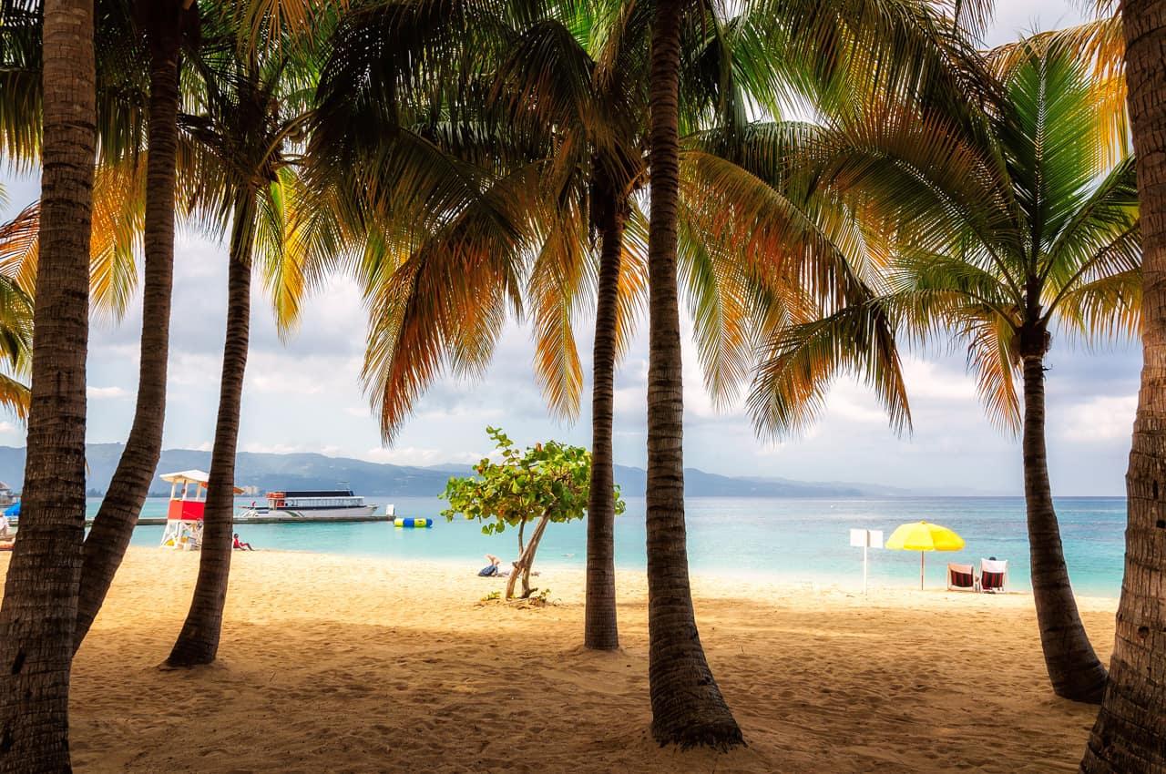 Palmeiras praia Montego Bay, Jamaica