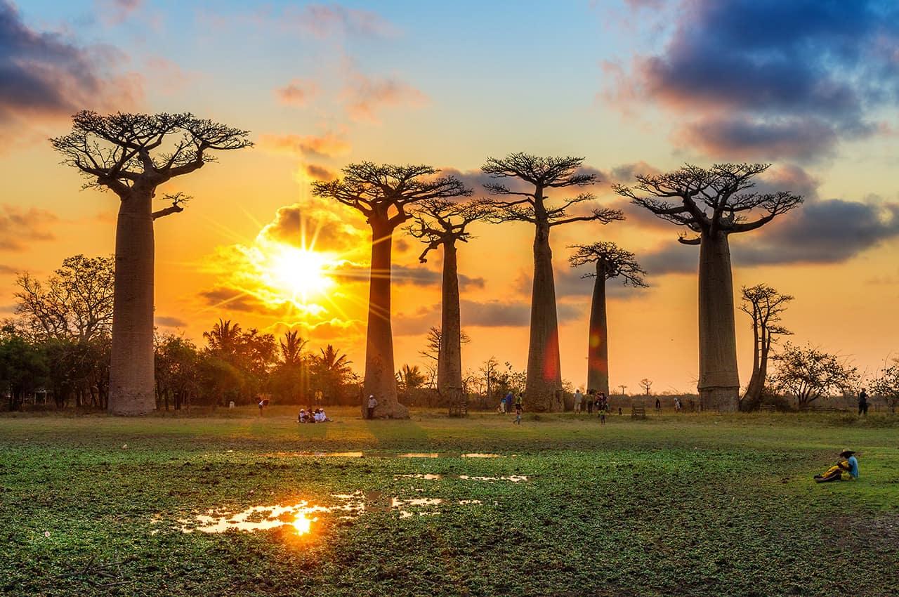 Alameda dos Baobás