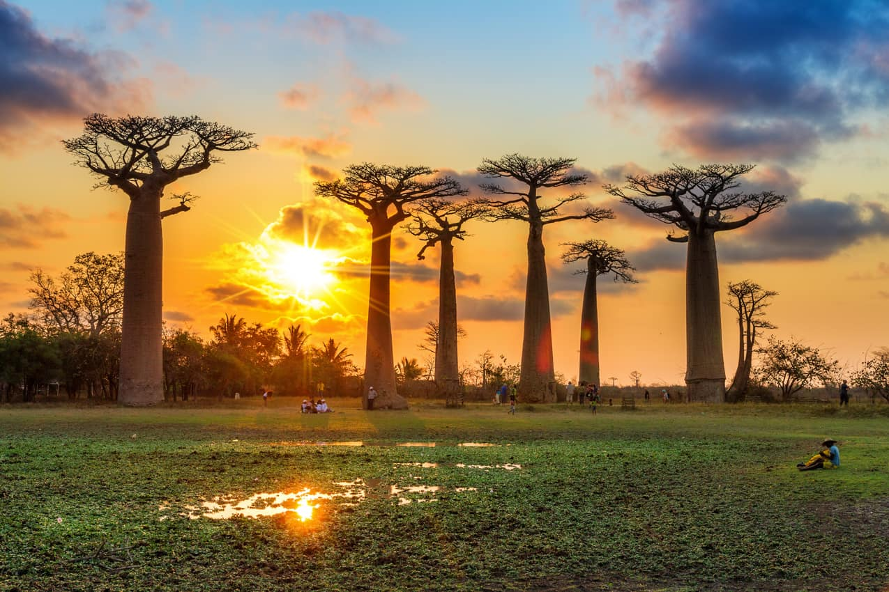 Viagem Madagascar atração turística baobá