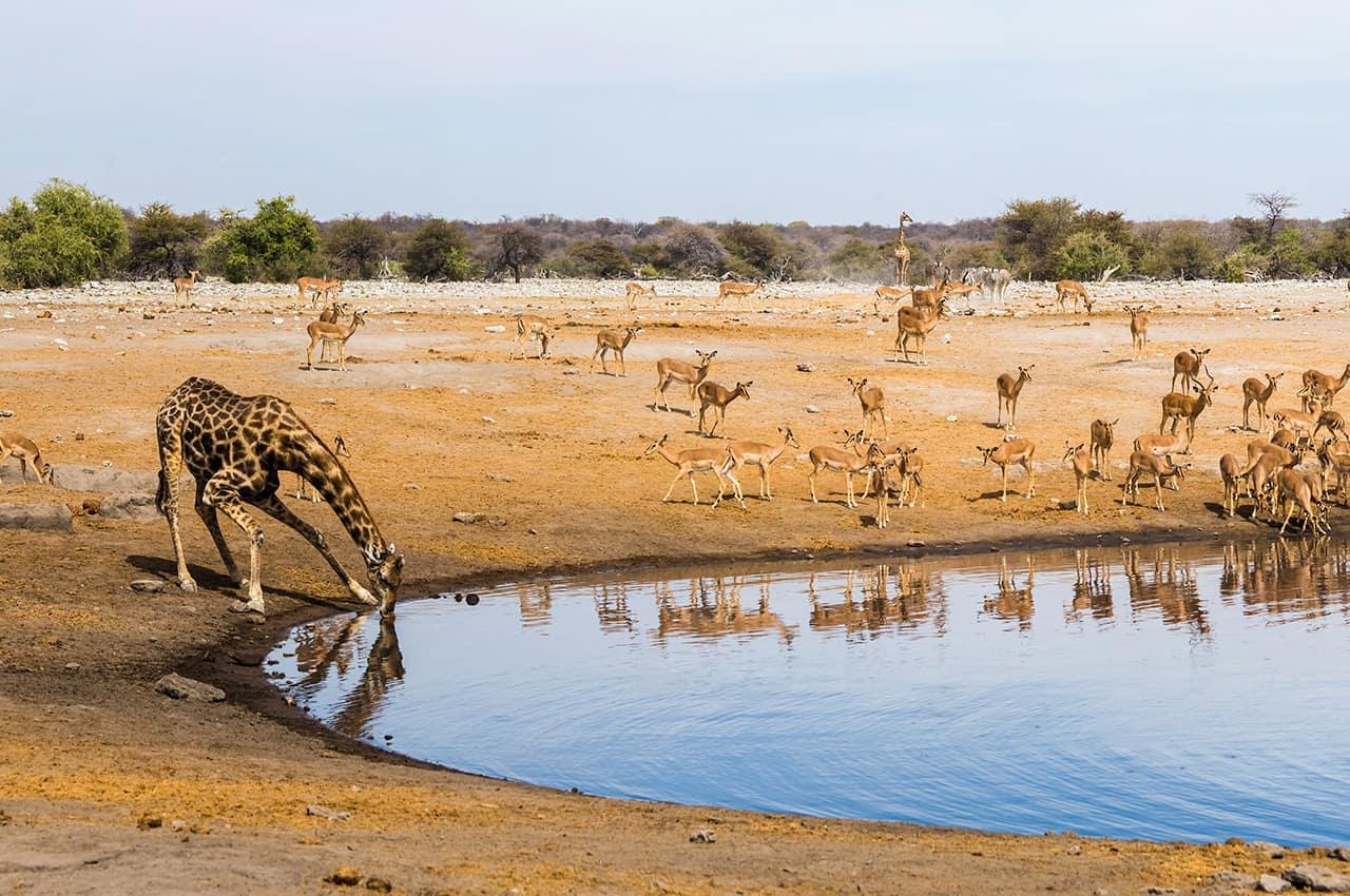 Parque nacional de Etosha - Namíbia