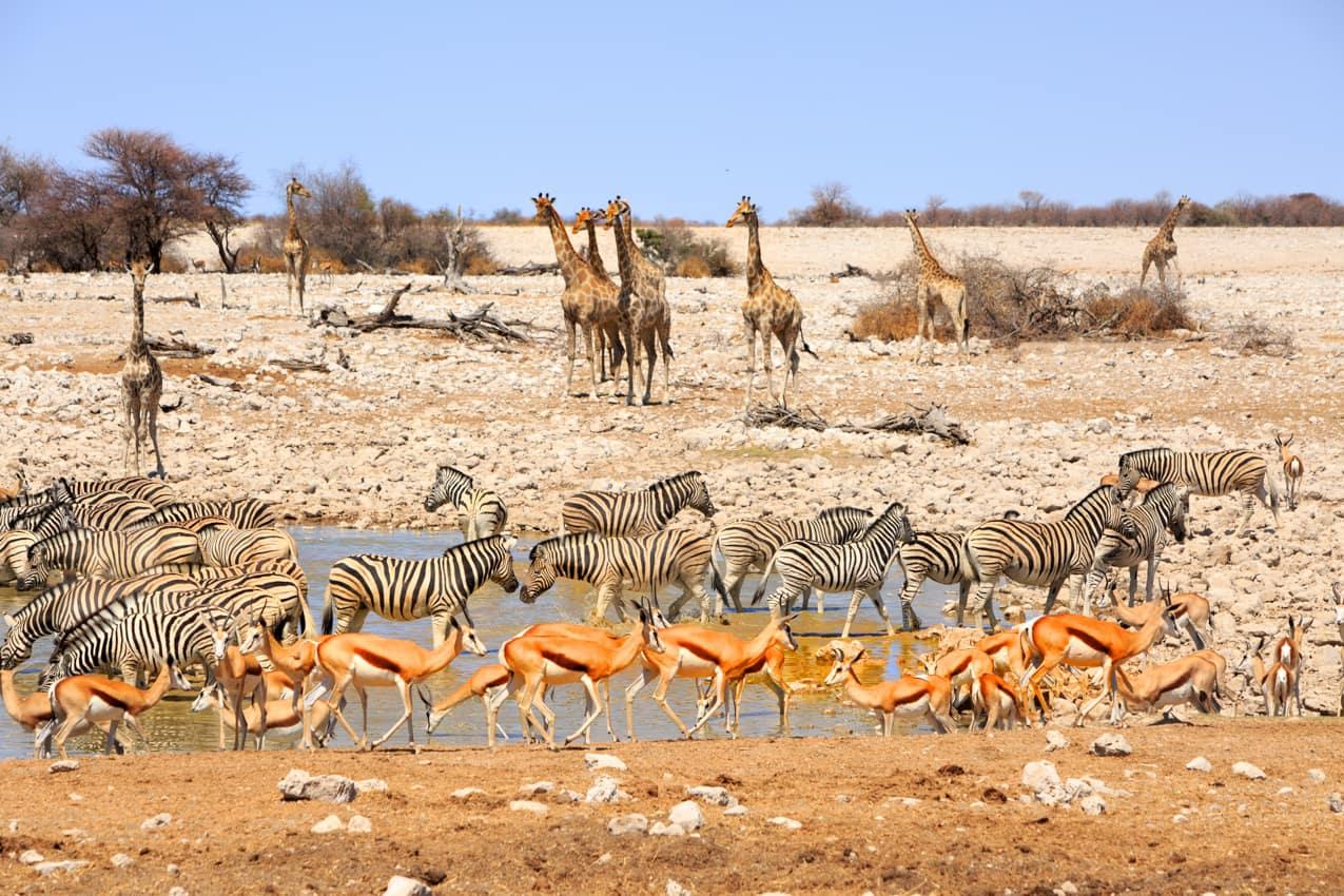 Parque Nacional Etosha turismo Namíbia