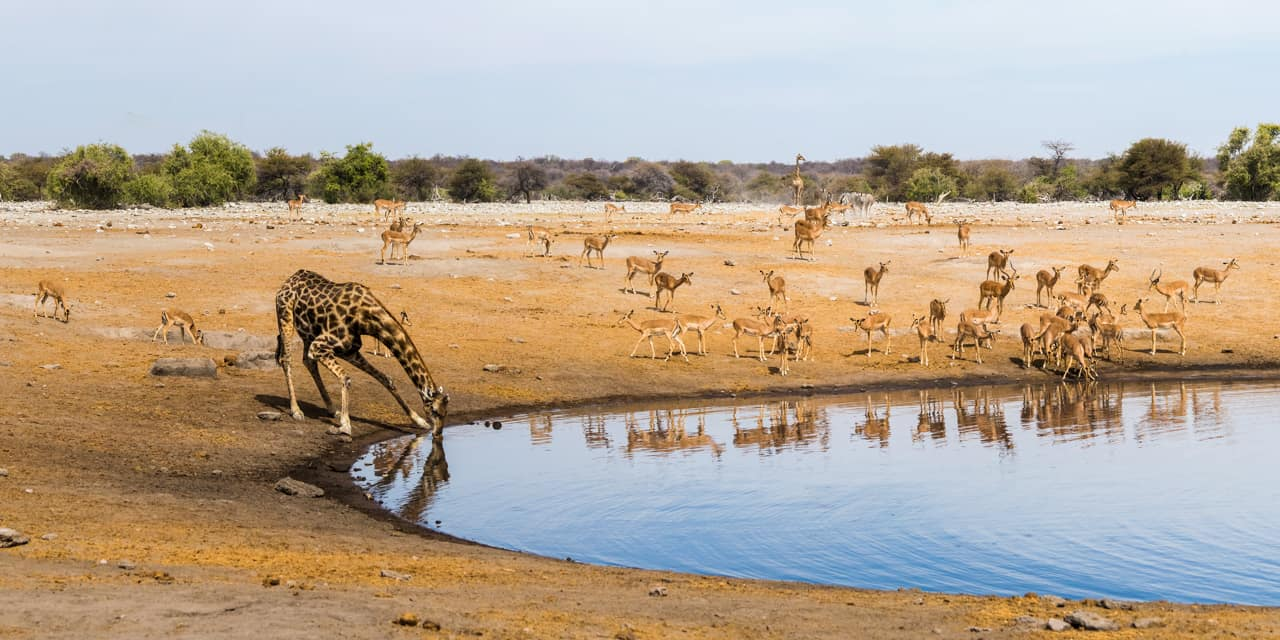 Ponto turístico Parque Nacional Etosha Namíbia