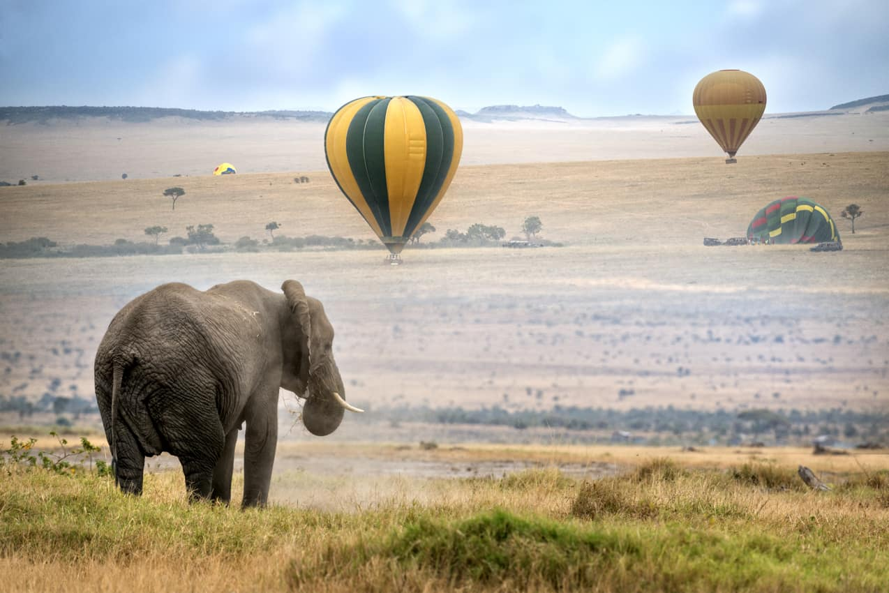 Atividades turística Reserva Nacional Masai Mara Quênia