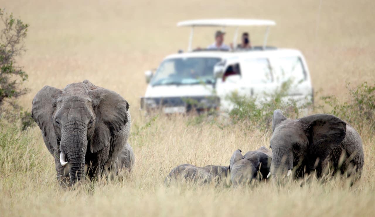 Safári vida selvagem turismo Quênia