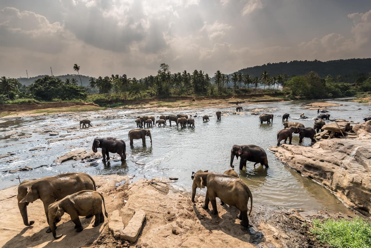 Atraçã turística Orfanato Elefantes Pinnawala, Sri Lanka