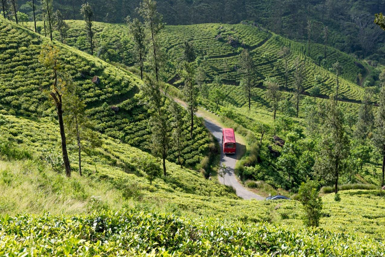 Plantações chá, Sri Lanka turismo