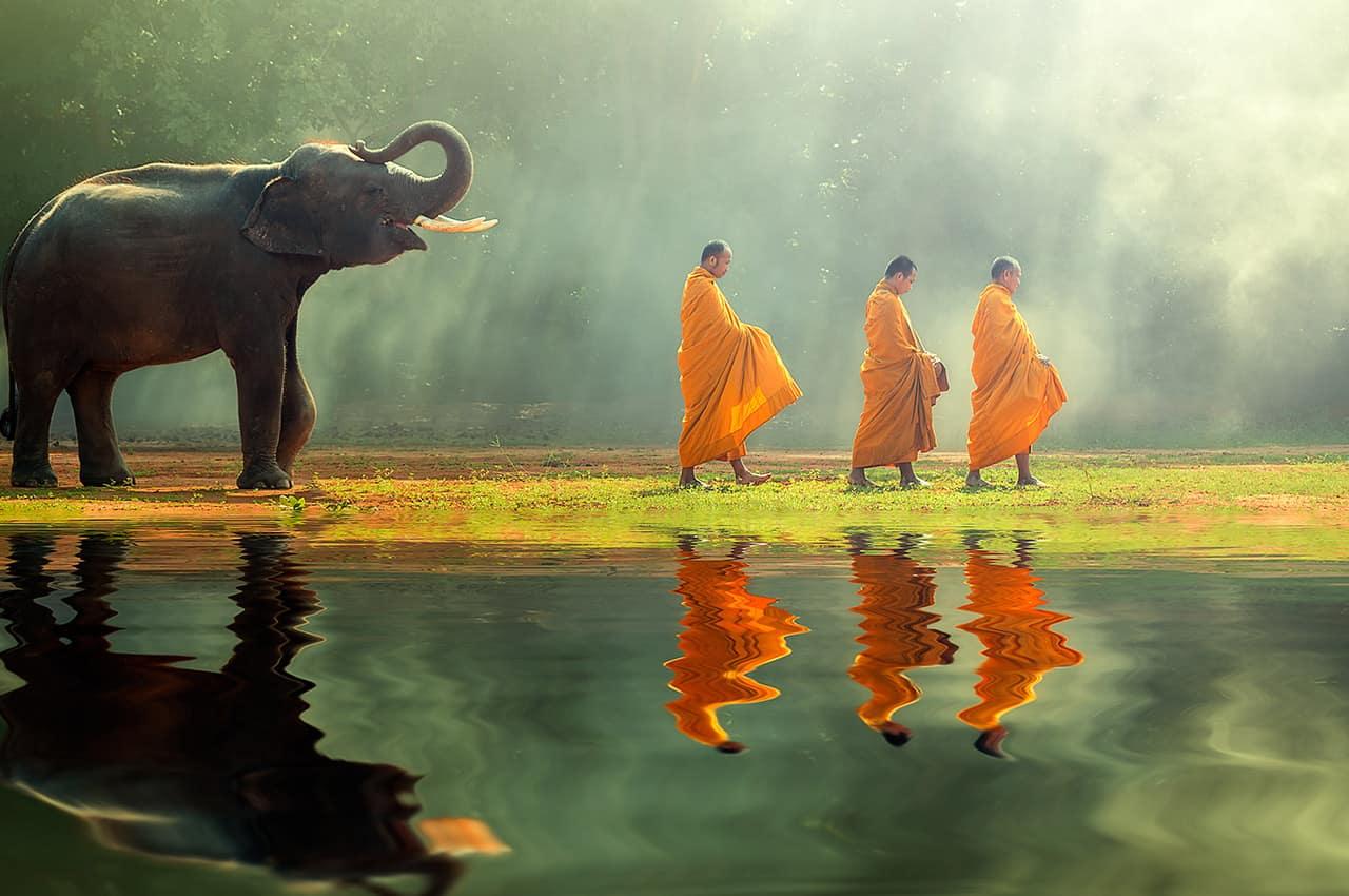 Monges budistas e elefante