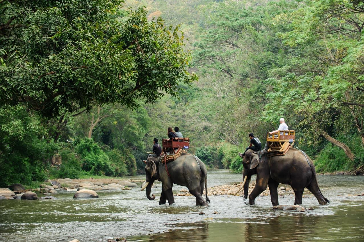 Passeio elefantes floresta tropical Tailândia