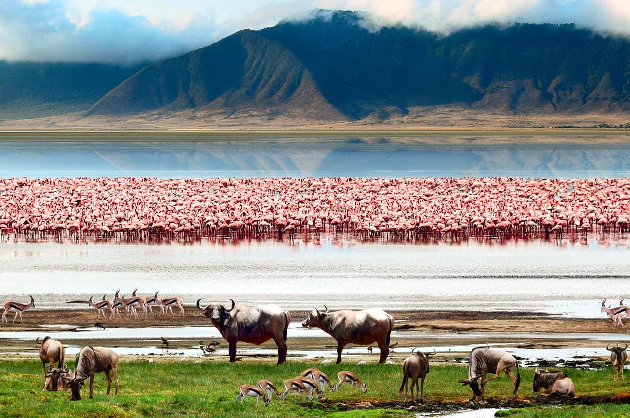 Area de conservacao de ngorongoro tanzania