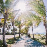 Hamilton island coqueiros