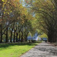 Jardim Carlton, Melbourne, Austrália