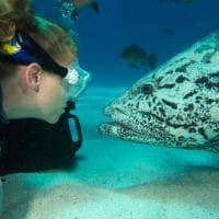 Pacote Austrália, Live aboard, Grande Barreira de Corais